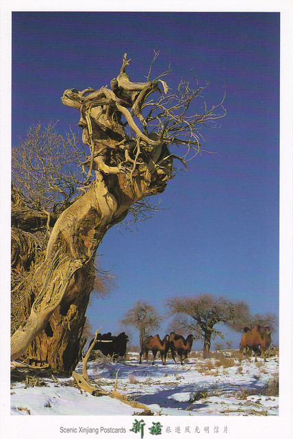 Ancient Chinese Tree & Camels Postcard