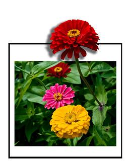 Flowers 2OOB_R