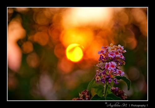 flowers sun flower fern sunrise landscape dawn flora nikon scene ferns d90 chaturshringi nikond90 18105vr beyondbokeh anshummandore anshumm ppmay11