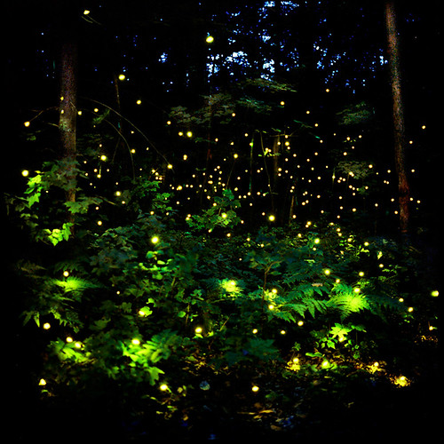"Barry Underwood ""Lightning Bugs"""