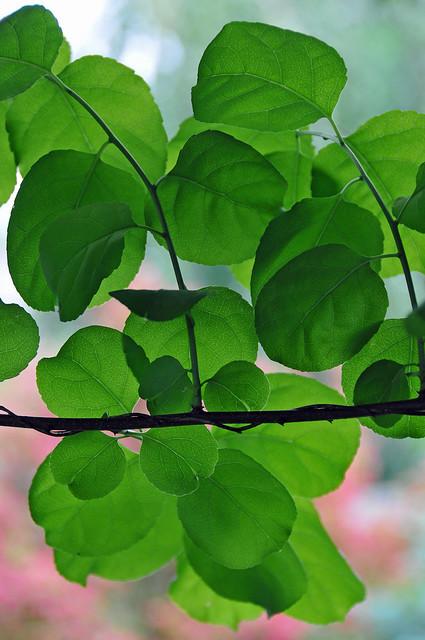 DGJ_5214 - Curtain of Green