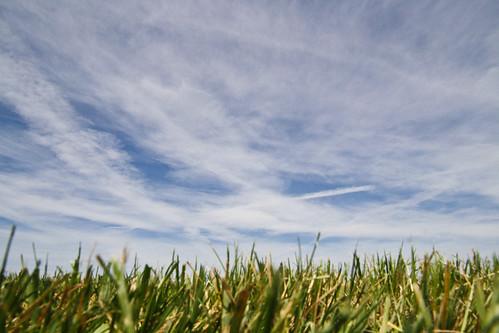 blue sky grass canon eos washington pod ground explore lowangle explored canonxs canonxseos ©brianpodruznyphotography