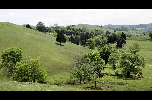 trees creek virginia stream hills pasture russellcounty