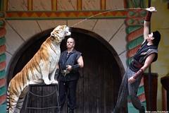 Big Cat Show - Tiger Feeding