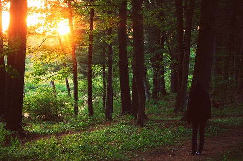 trees sunset summer people plants sun green nature girl forest landscape person sweater spring woods nikon massachusetts teenager erica lonely picnik d40