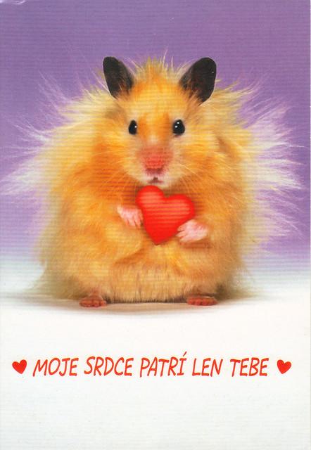 Hamster Valentine Postcard
