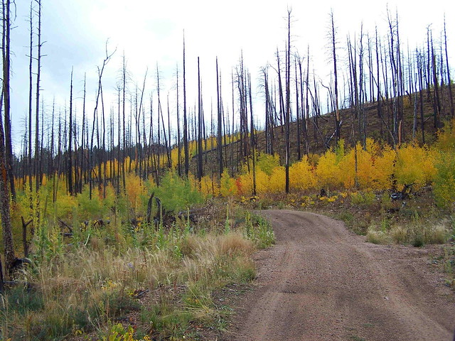 METBERRY TRAIL - FALL 09
