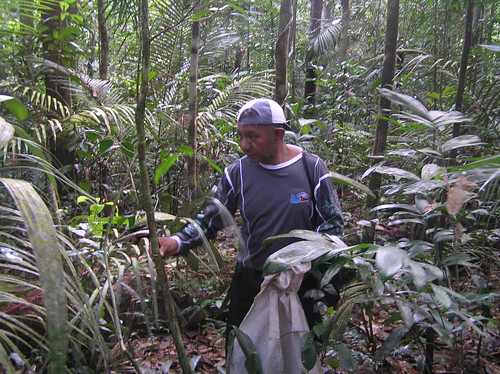 Mon, 06/05/2006 - 16:26 - Jairo Lopes (botanist, mateiro) in 25-ha plot. Credit: CTFS