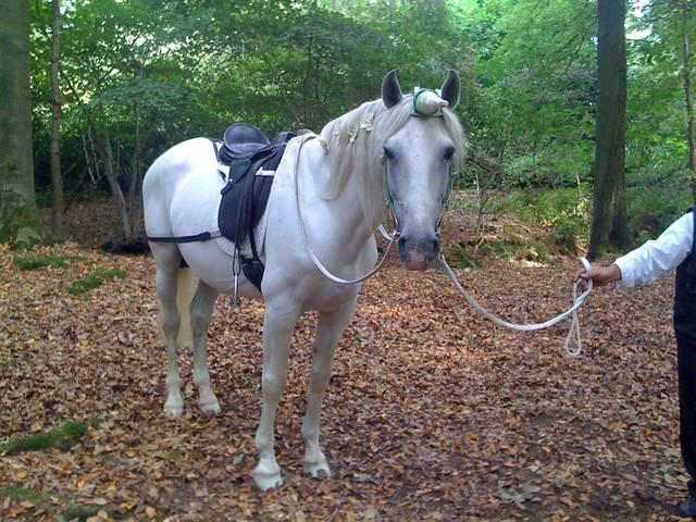 Real life unicorn | lemmenspieter | Flickr