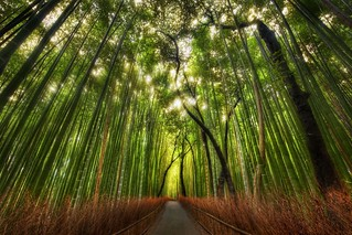 The Bamboo Forest and some great Twitter Lists to follow | by Trey Ratcliff
