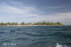 Indonesia  Maluku  Duroa