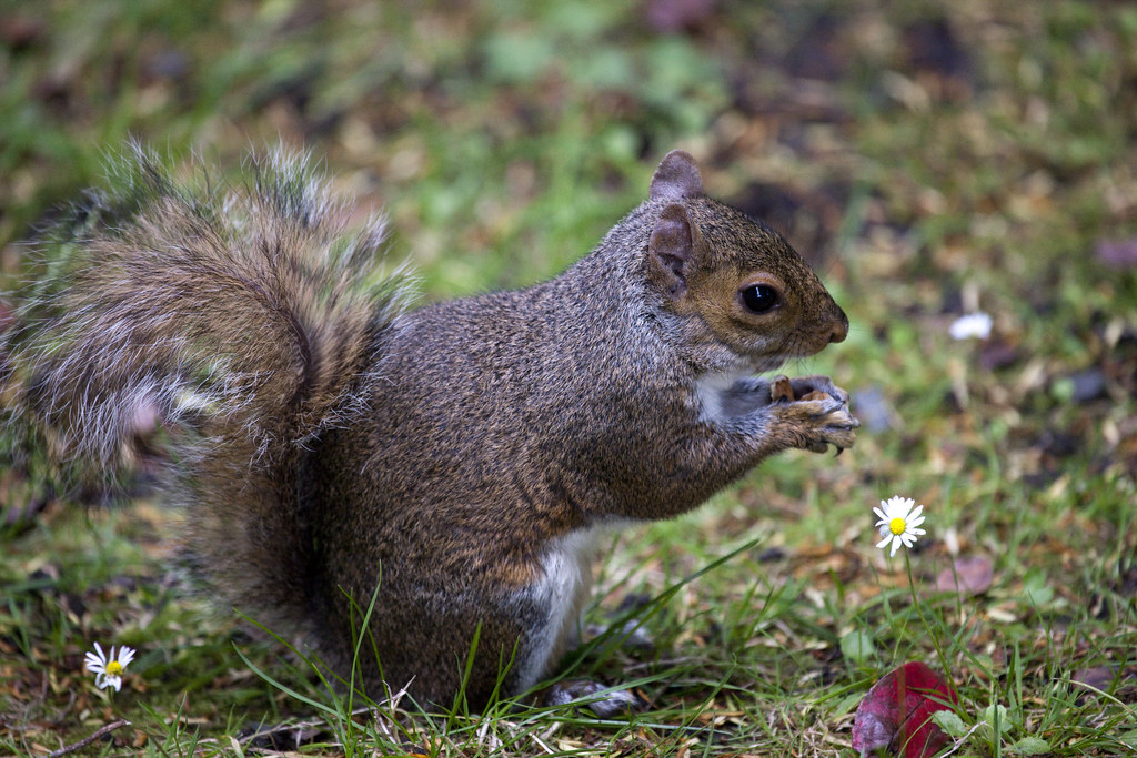 Photo of a squirrel in a backyard.