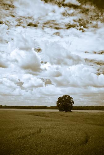 sky cloud nature landscape geotagged natur feld himmel wolken landschaft brandenburg baum gottsdorf 18200mmf3556gvr d80 nutheurstromtal geo:lat=52117831 geo:lon=13066939