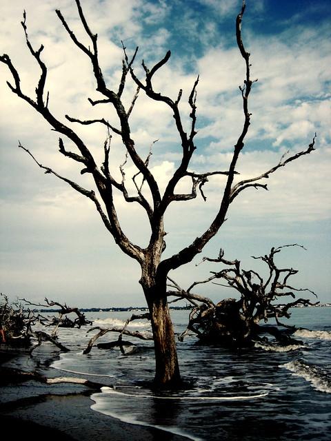 ghosttree [Explored]