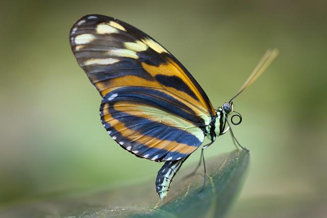 Butterfly Palace 5927