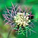 wildflower by mkurtel