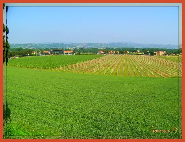 TORGIANO - Le vigne Lungarotti