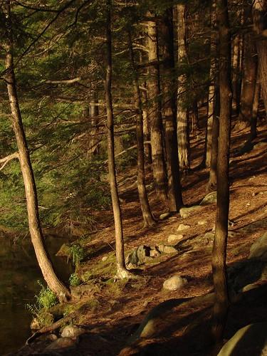 statepark trees sunset newhampshire pawtuckaway horseisland pawtuckawaystatepark codycarlson codymcarlson