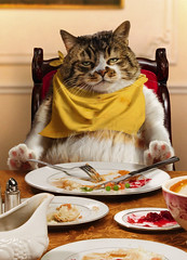 Happy Thanksgiving! | by moggierocket