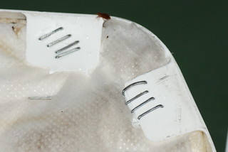 Bed bug on boxsprings