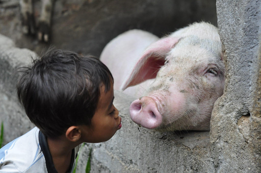 Ubud, Bali - Adit with his pet pig by Mio Cade