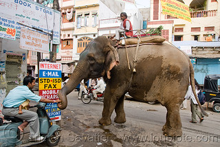 DSC09686 - Elephant with his Mahout | by loupiote (Old Skool) pro