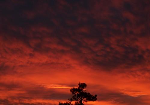 autumn red tree clouds sunrise arkansas fayetteville