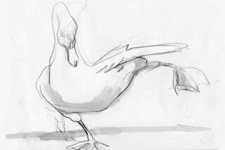 Swan Stretch