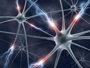 brain-neurons | Fotis Bobolas | Flickr