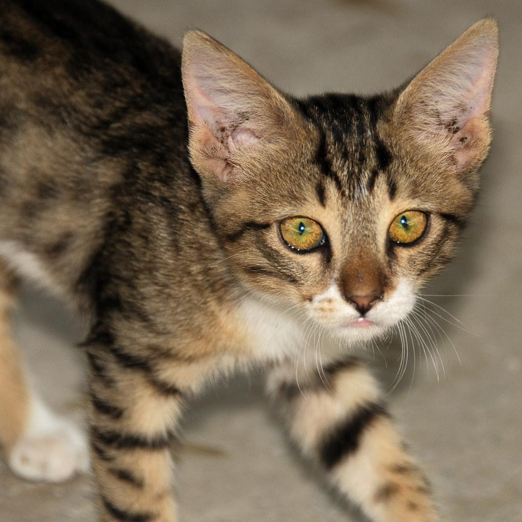 Second Kitten by christian.senger