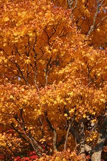 Lake Towada Cache (GC15YPZ) - Autumn Color