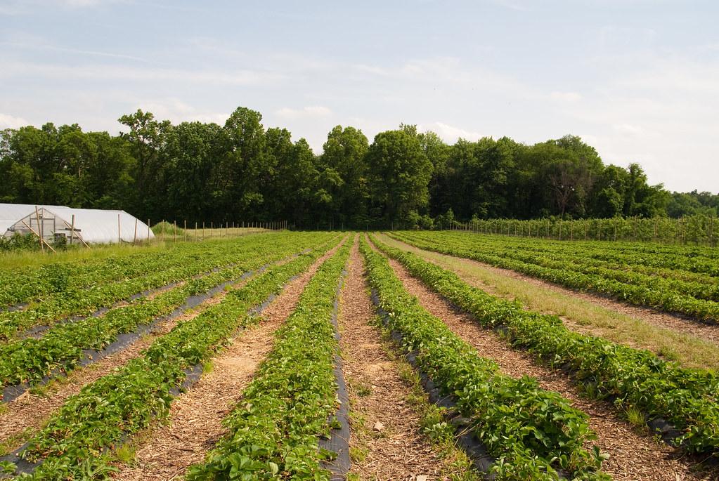 Memorial Day Weekend: Terhune Orchards
