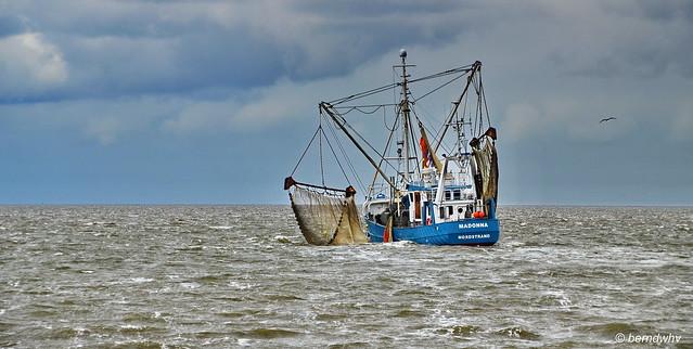 Im nordfriesischen Wattenmeer vor Nordstrand