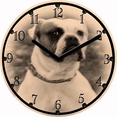 Macy Dog Pet Clock | by customclockface