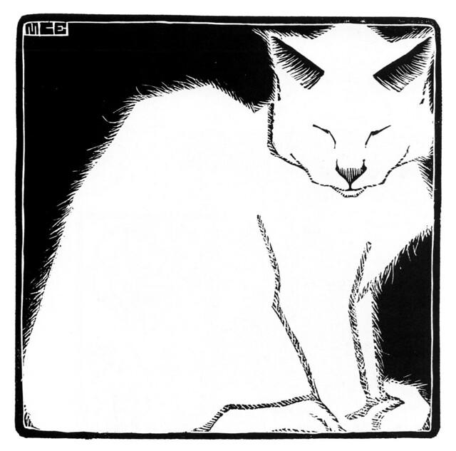 Gros noir chatte Tumblr