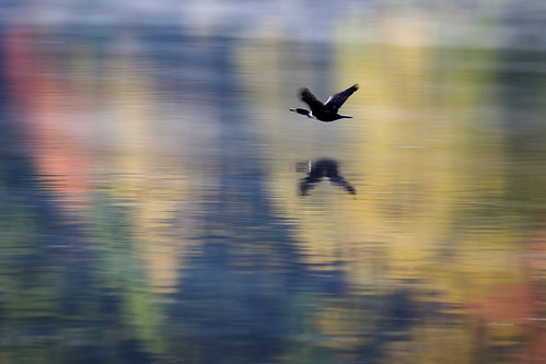 autumn reflection fall nc flight mallard soe ghholt storybookwinner cpmg1109sa storybookttwwinner
