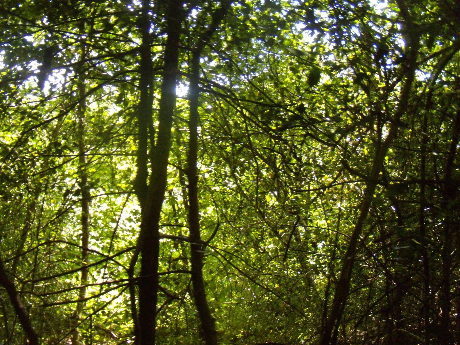 Sun through trees Haslemere round walk
