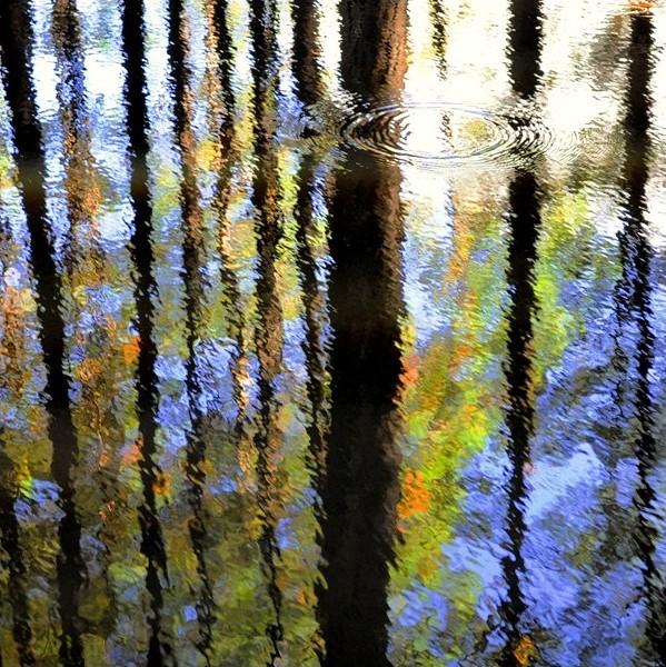 natures liquid canvas