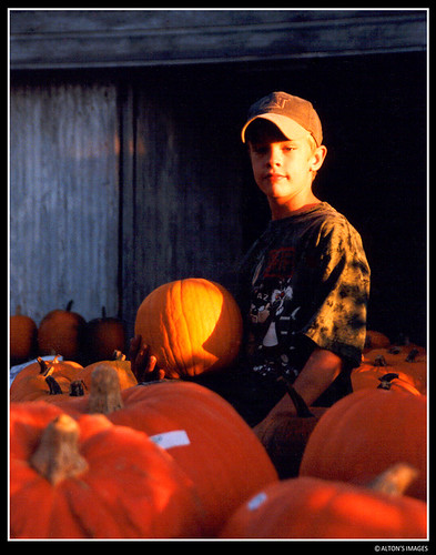 autumn boy sunset portrait people orange usa male vegetables hat rural children pumpkin gold golden child market pennsylvania farm pumpkins farming harvest camo cap camouflage 1998 casual agriculture alton altonthompson 唐博敦