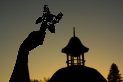 sunset flower silhouette vermont hand sundown arm dusk gazebo lilac vt randolph canon40d