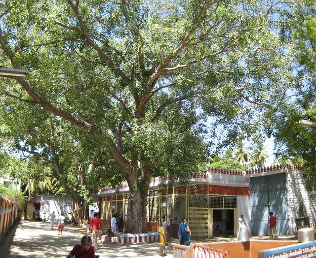 Sri Raghavendhra Mutt, Srirangam