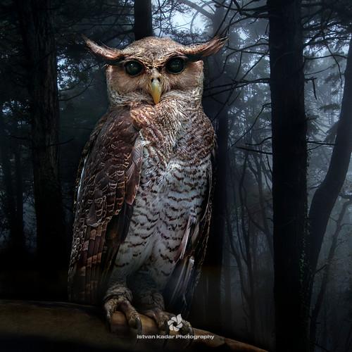 bird owl foresteagleowl avianexcellence typicalowl bubonipalensis spotbelliedeagleowl magicunicornverybest magicunicornmasterpiece
