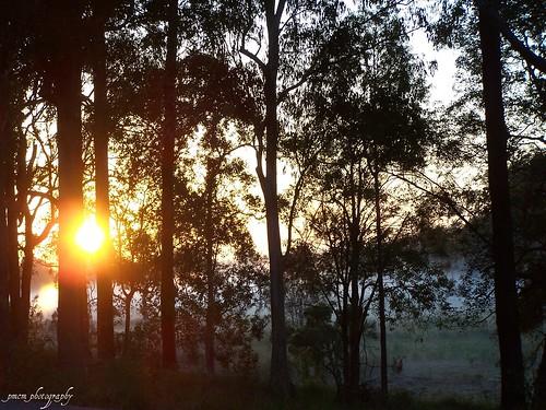 grass silhouette fog sunrise landscapes australia explore queensland sunburst lightning goldcoast goldcoasthinterland straightoutofthecamera sootc kodakdx7590zoom mudgeeraba absolutelystunningscapes