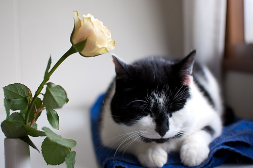Juuso and a rose | by jlz