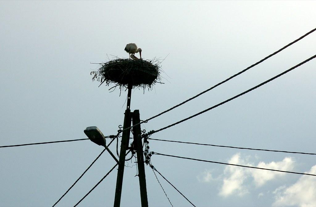 Bocianie gniazdo / Stork's nest