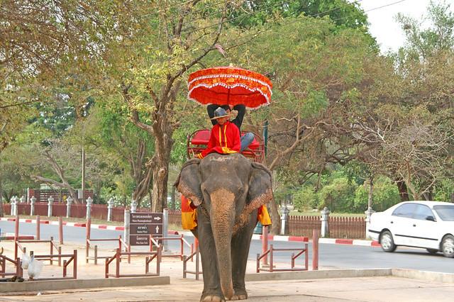 Elephant riding in Ayutthaya, Thailand