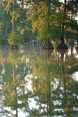 morning trees sun lake reflection water fog la moss dock louisiana lafayette spanish swamp cypress lakemartin stmartinville breauxbridge