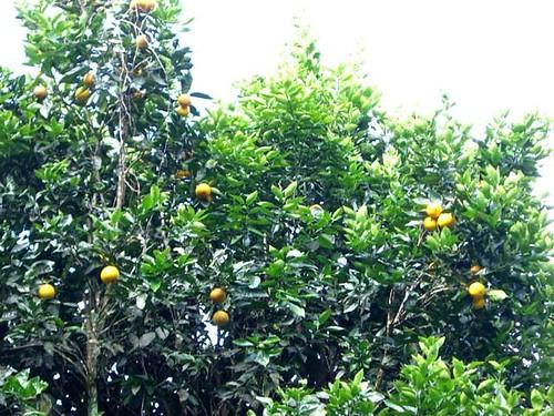 "Citrus-Galapagos Tags""2009-10-22"" | by GaryAScott"