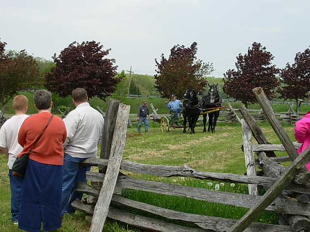 Horses at Somerset County Historical Society | PA Trails of