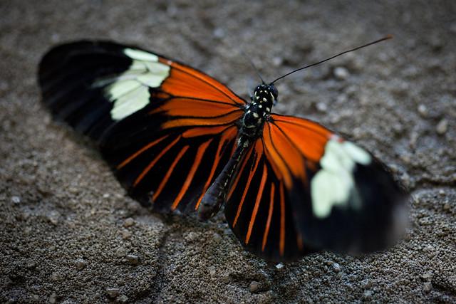 Butterfly Palace 5949